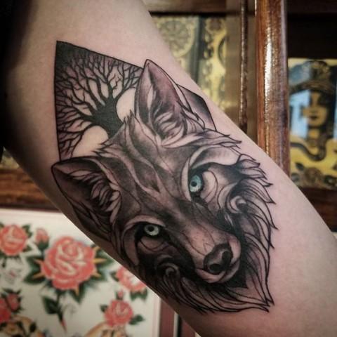 lobo con arbol